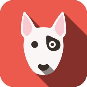 Espiritu Wanderlust importar mascota Tailandia viajar con perro
